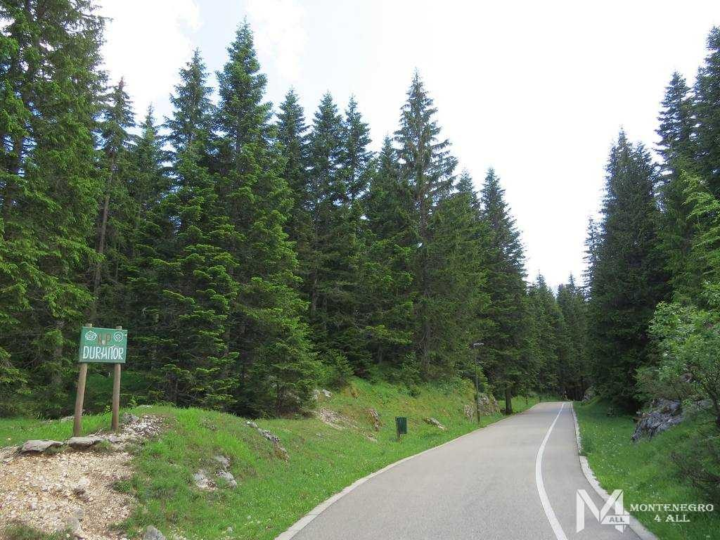 Пешеходная дорожка в национальном парке