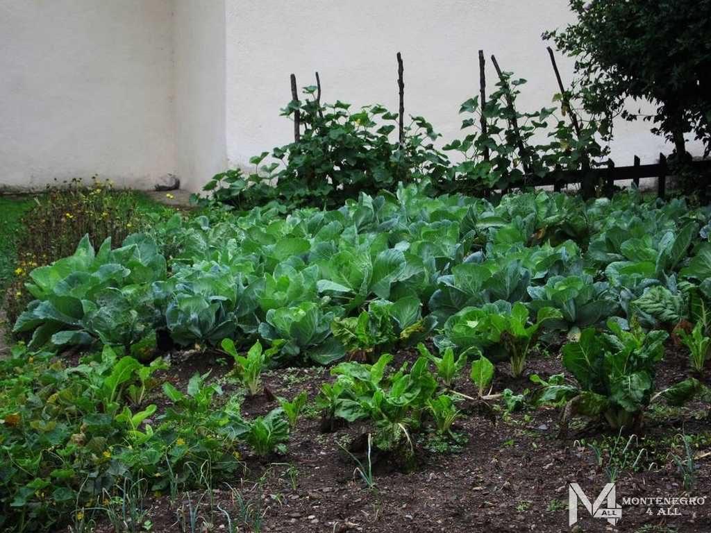 Огород рядом с монастырем