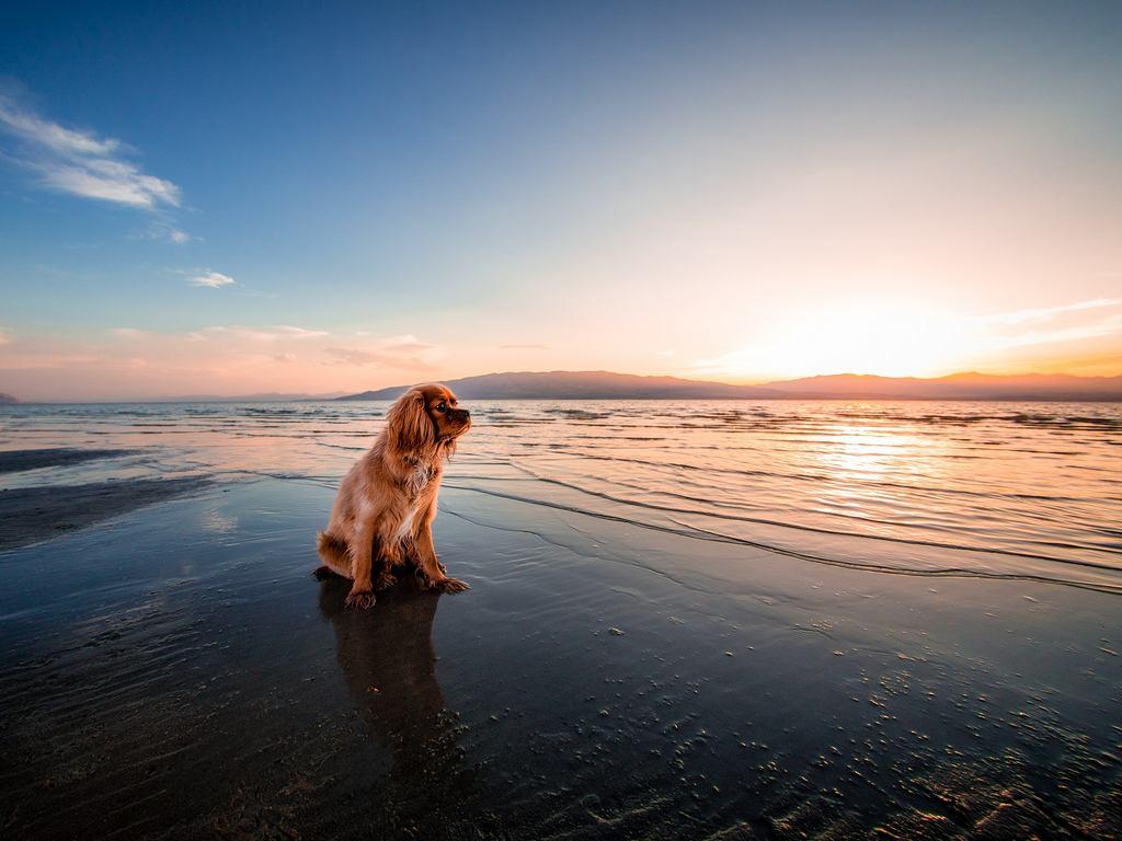 Пляжи для собак в Черногории