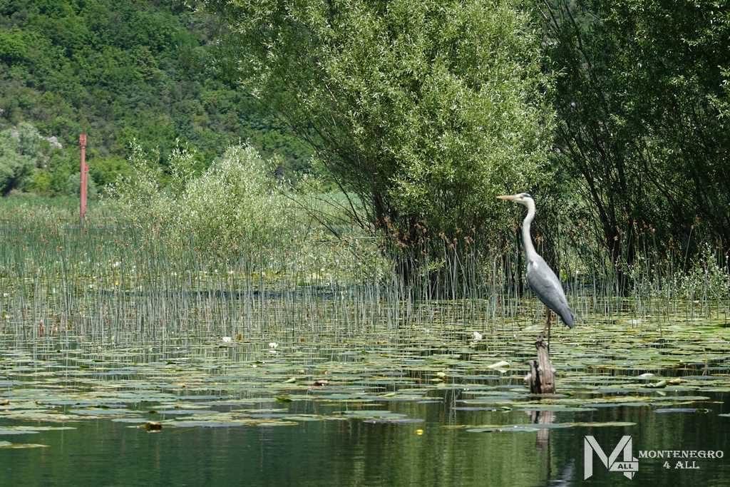 Путешествие по реке Црноевича