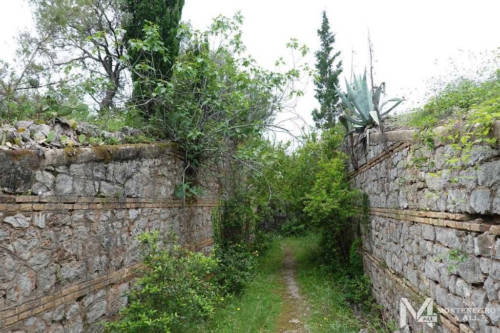Буйная растительность рядом с фортом