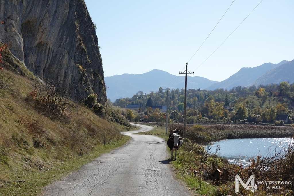 Дорога к каньону Невидио