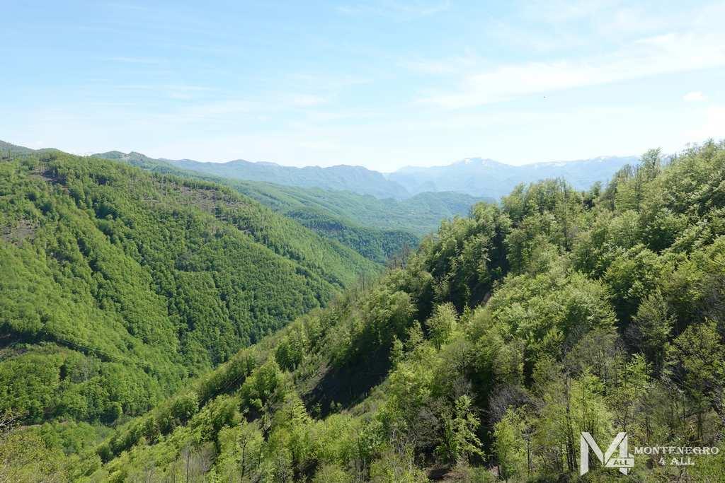 Чистый воздух многовековых лесов